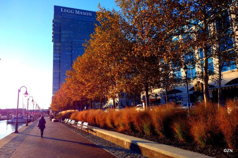 Caminhe pelo porto em Baltimore