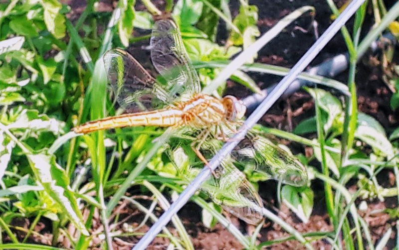 Dragonfly in the sun!