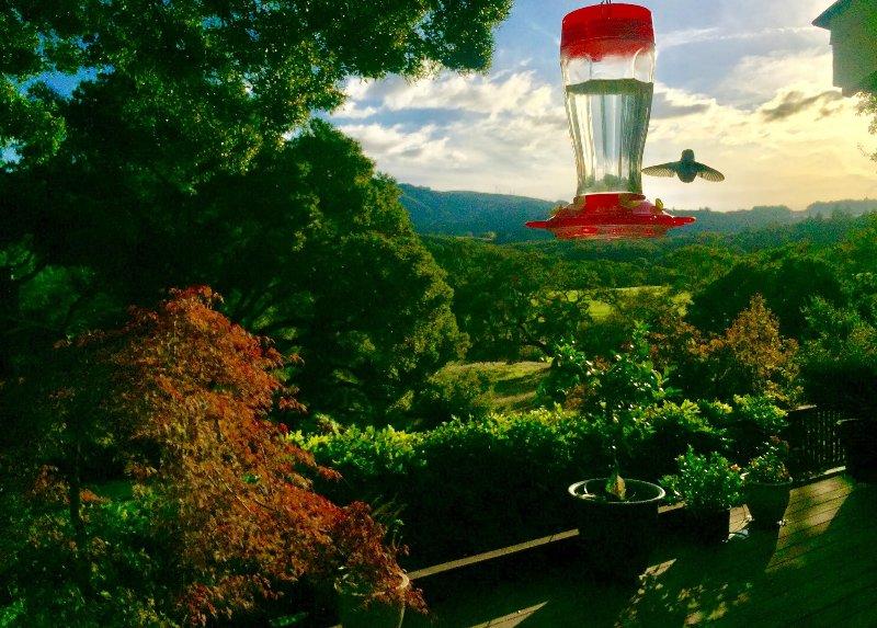 An abundance of hummingbirds all around the property.