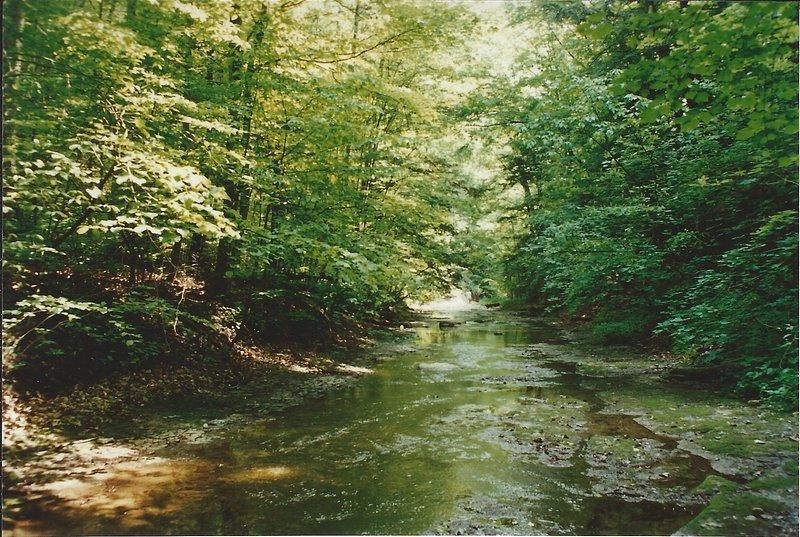 Menteth Creek - grande randonnée, minnowing et la chasse aux fossiles