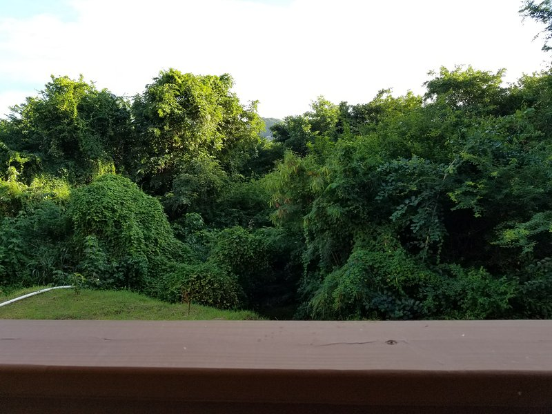 View from apartment porch