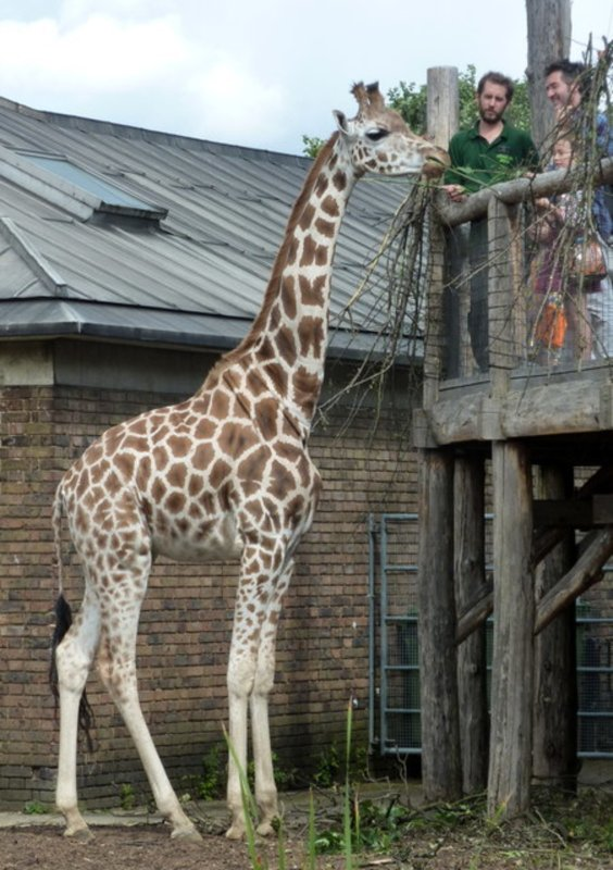 London Zoo - Meet and feed the animals!