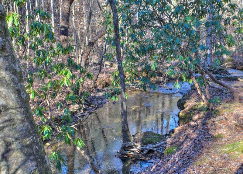 Short Walk to Creek Behind Cabin