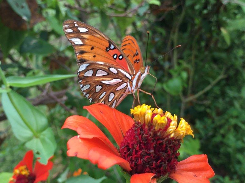 Poolside Butterfly