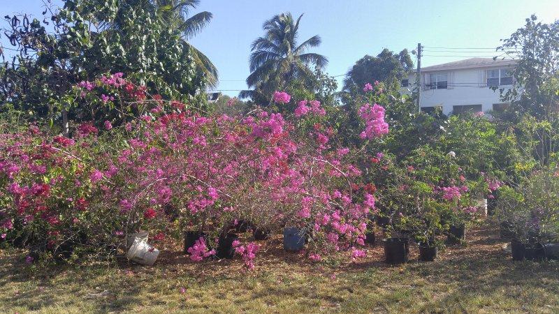 'Genuine Creole Hospitality'
