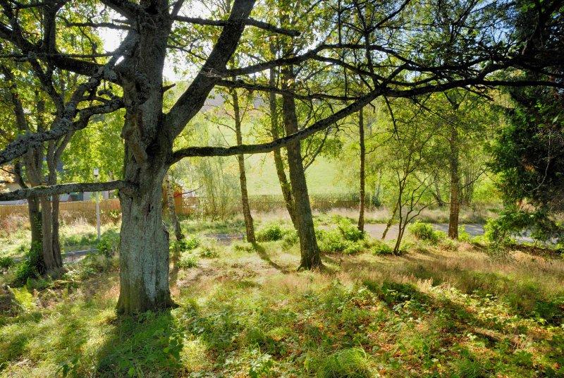 Woods en Dun Aluinn