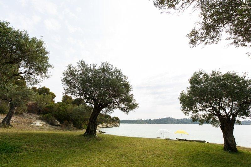 Jardín del olivo en la playa
