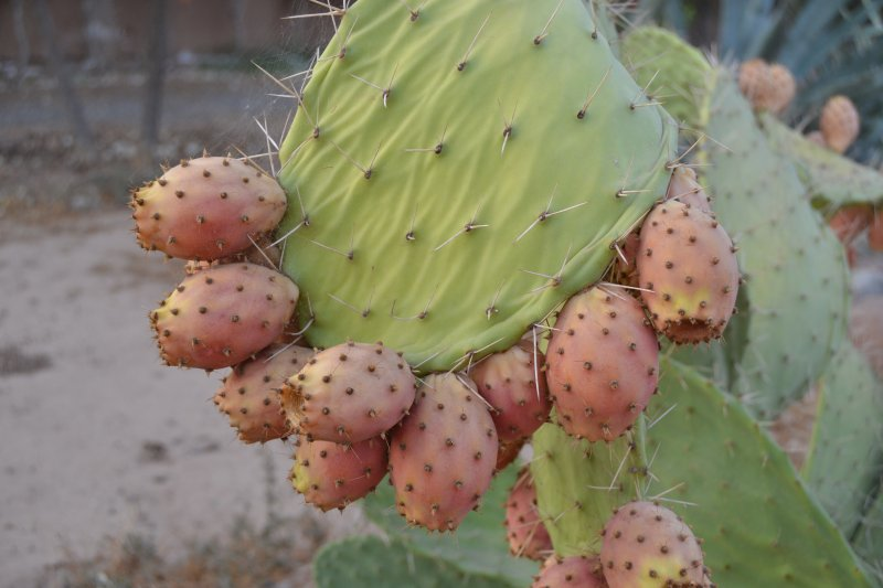 Fruit for jams