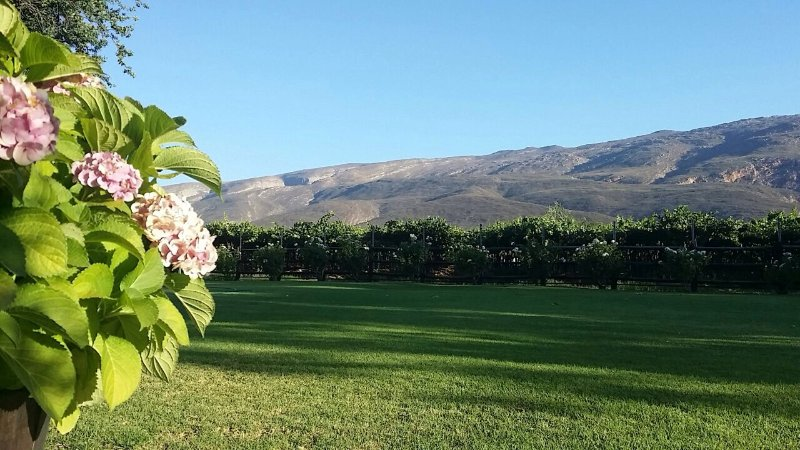 Garden view of vineyards and mountains. Beautiful scenery and relaxing for guest(s).
