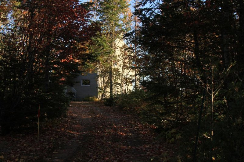 Laneway leading to the house and our private woodsy 3/4 acre lot