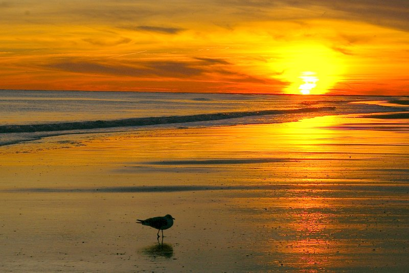 Ensam Seagull njuter Beautiful Sunset!