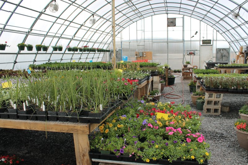 Greenhouse full of annuals,  perennials, vegetables and herbs.