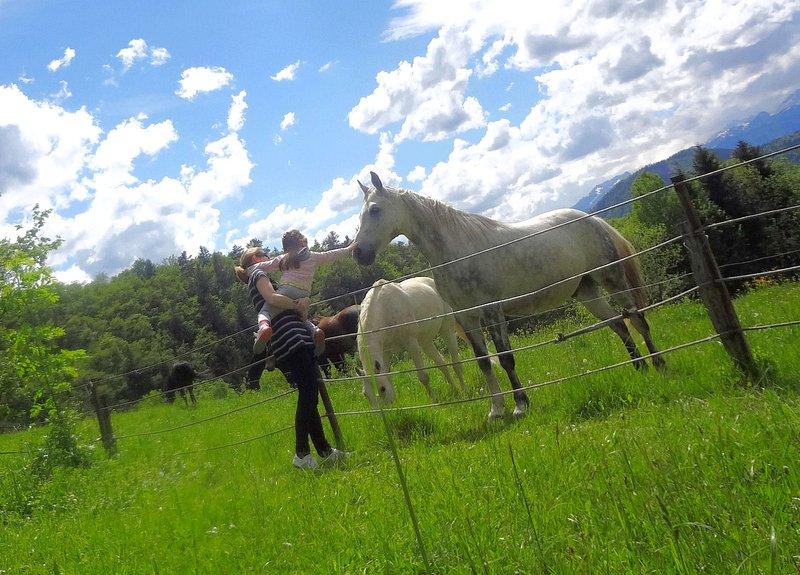 Pferde auf einer Weide in unmittelbarer Nähe der Wohnung