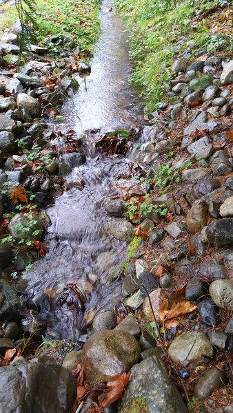 Ruisseau Willow vu et entendu devant la maison
