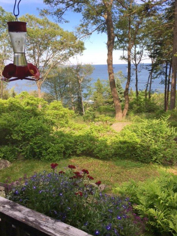 Notre alimentation attire les colibris chaque été.