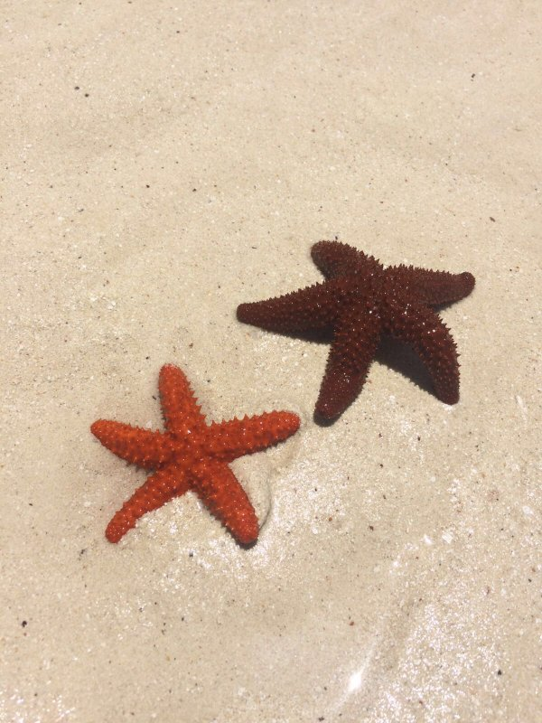 Sea treasures found on the beach.