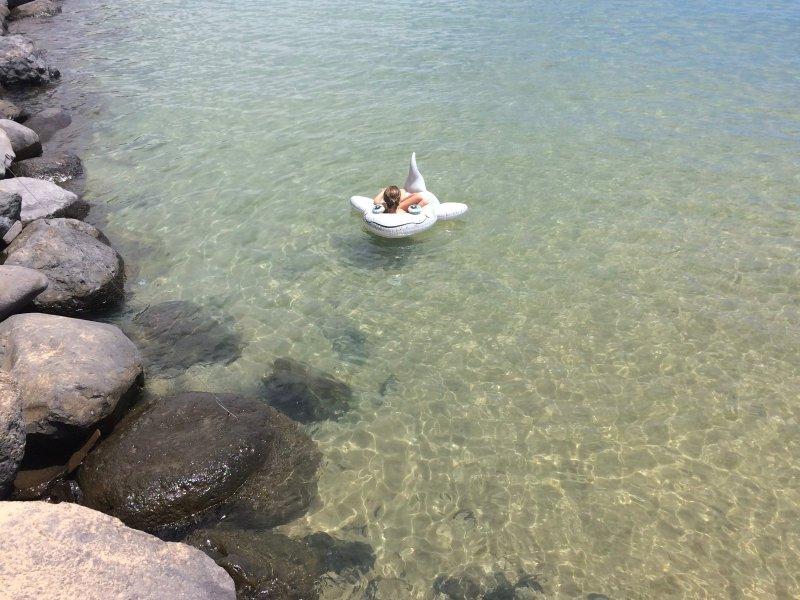Chill a cabo una la playa o tomar un viaje en barco y avistamiento de delfines o tener un almuerzo perezoso locales