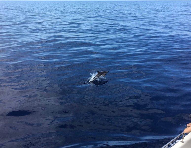 Delfines viajes de observación son populares desde el puerto deportivo de Calheta sólo 5 minutos en coche