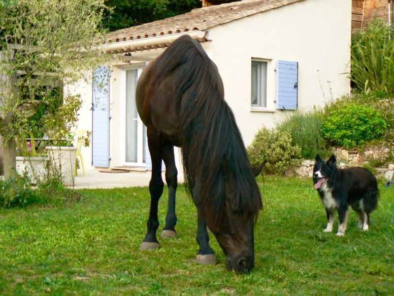 """Dietro il cavallo è il """"Happy Studio"""" completamente indipendente dalla casa."""