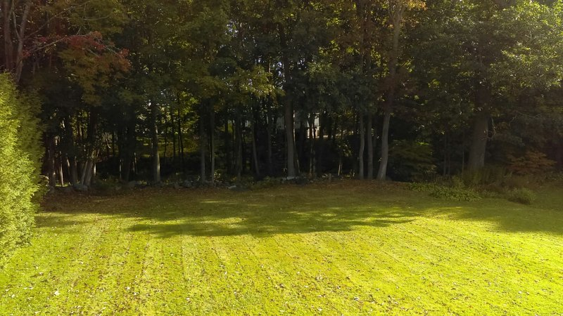Large open backyard