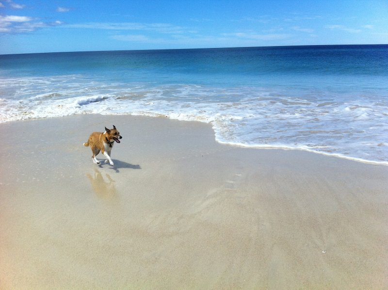 Guilderton dog beach 100metre walk away.