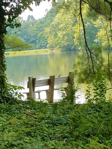A Kingfisher fica inspirado para ter um descanso no Lago Oséias.