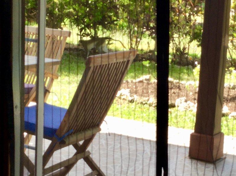 Monkey in the yard!