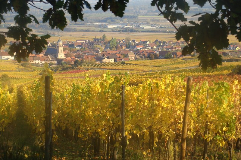 The village of Saint Hippolyte surrounded by its vineyard.