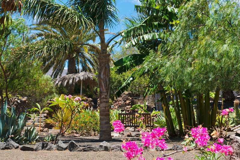 The garden has many mature tropical plants.