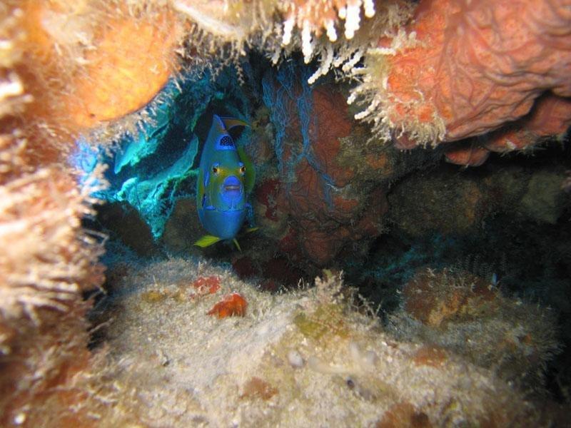 Cozumel sous-marine