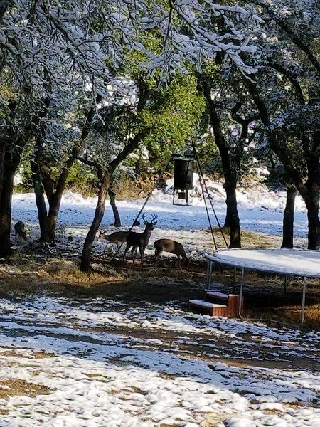 Cerfs profiter de la neige