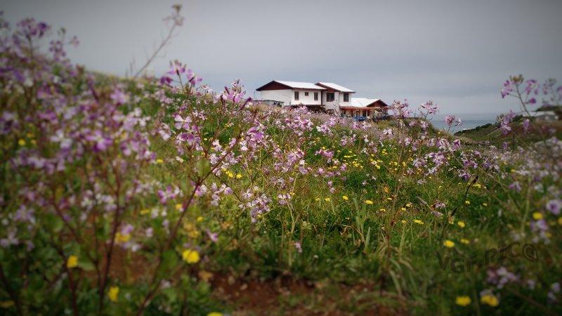 Cabanas,hospedaje rural, apartment, holiday rental in Puerto Saavedra