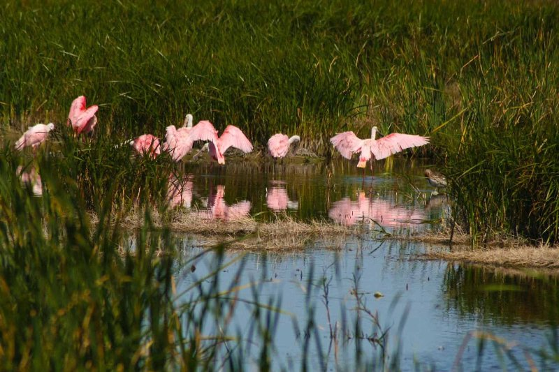 ¡El Centro de Observación de Aves es un excelente lugar para ver la vida salvaje local!