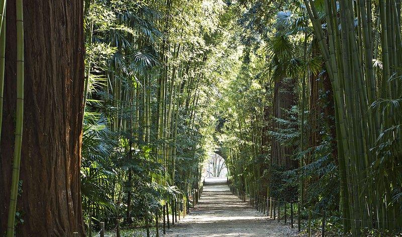 De bamboo grove in de buurt van Anduze