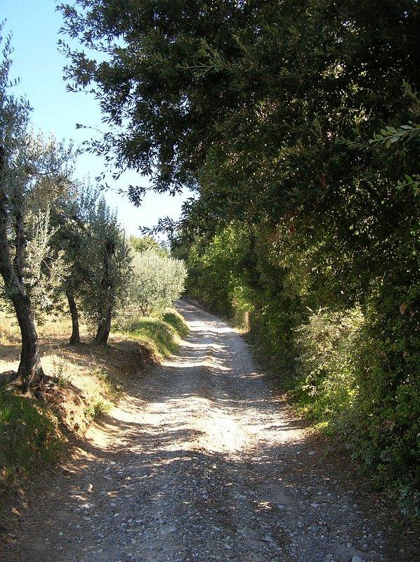 nur ein kurzer Schritt außerhalb des Hauses nach unten in Richtung auf den Olivenhaine und Kastanienwälder