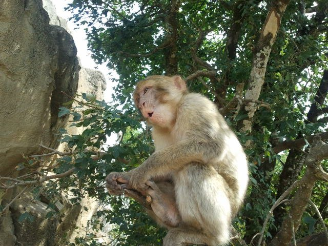 Monkey Forest in Rocamadour at 20 min