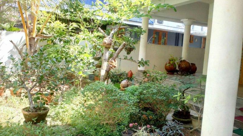 garden consists of varieties of fruits