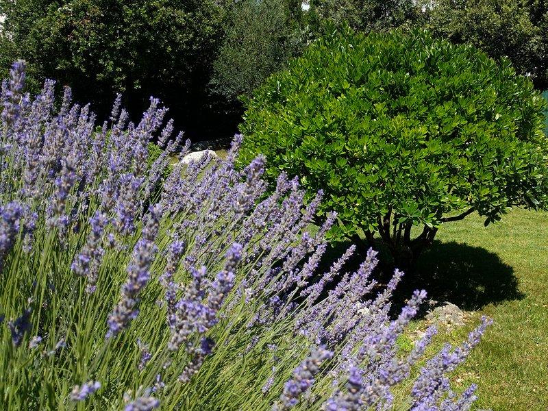 Lavanda & Garden.