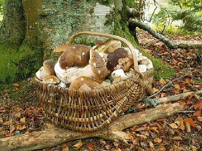 Corner paddenstoelen en bessen plukken
