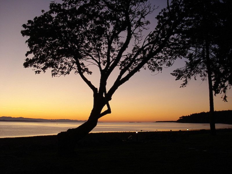 Signature Tree at Qualicum Landing ~ Watch the Cruise Ships Go By!