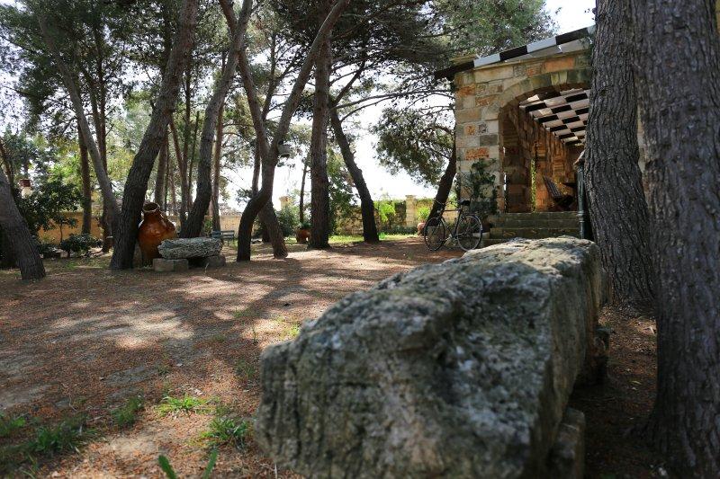Detail of pine wood Villa Asfodeli