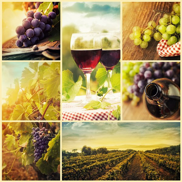 Services on request: Winetours and guided tours