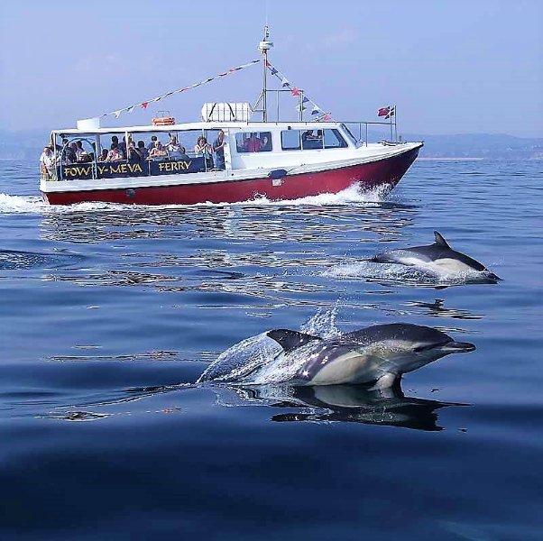 Dophins nadar con los Fowey Ferry (verano 2017)