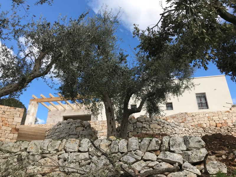 Looking up through our Olive grove to the villa but hidden away is a 400 yr old Trullo magical ruin.