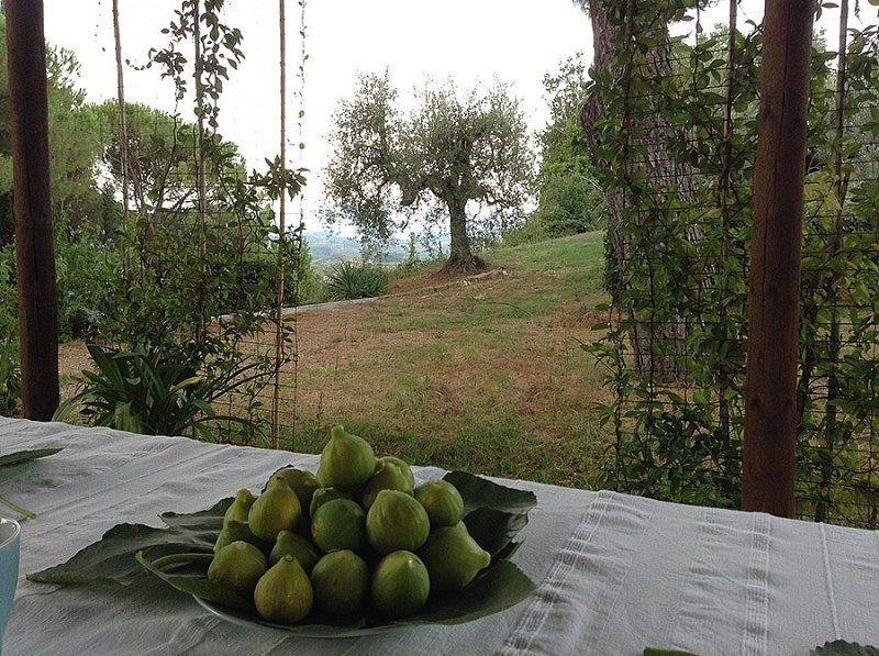 San Martino a Maiano Holiday Home Sleeps 6 with WiFi - 5570338, vacation rental in Lucardo