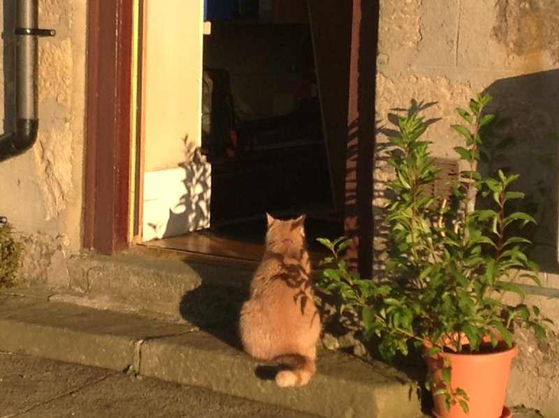 One of our cats enjoying the sunshine.