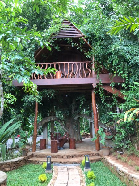 SLEEP IN A REAL TREE HOUSE An amazing Tree House on top of a FICUS TREE