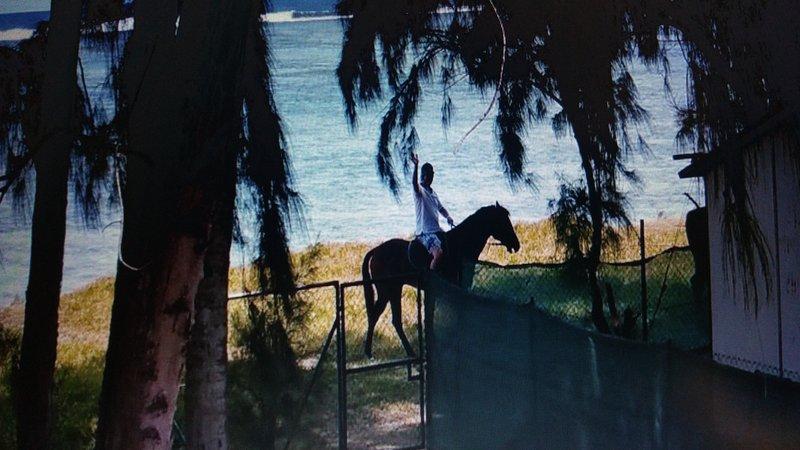 Paardrijden / stal in de buurt van de bungalow
