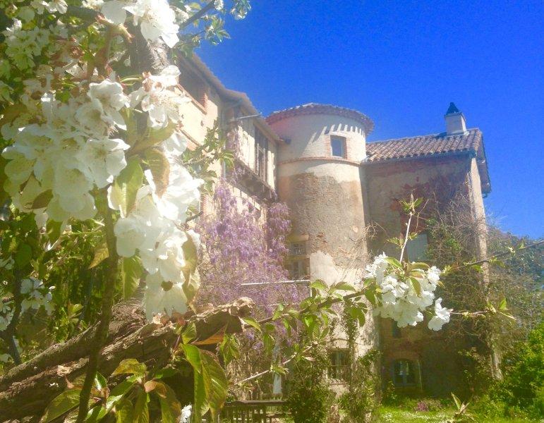Martel au printemps. glycines et roses en pleine floraison.