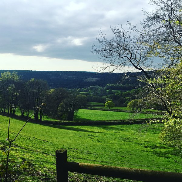 Local views over the Tamar Valley.